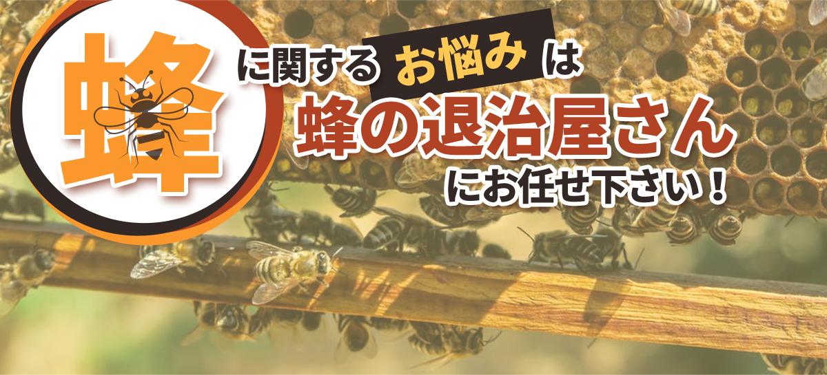 千葉、東京、埼玉、茨城の各県で蜂に関するお悩み、蜂の駆除お任せください。千葉、東京、埼玉、茨城の各県で蜂に関するお悩み、蜂の駆除お任せください。迅速な対応で最短30分でお宅に伺います。料金は、蜂の巣駆除業界で最安値の7500円から。アフターフォローも完璧。蜂の巣を駆除した場所と同じ場所に巣が作られにくくする薬剤を散布します。万が一、6ヵ月以内に同じ場所に再度巣が作られた場合は無料で駆除致します。