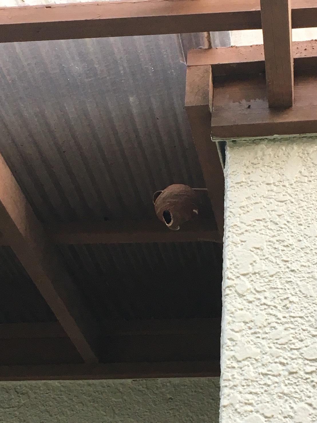 千葉県柏市にて蜂の巣駆除依頼入りました!~6月29日~