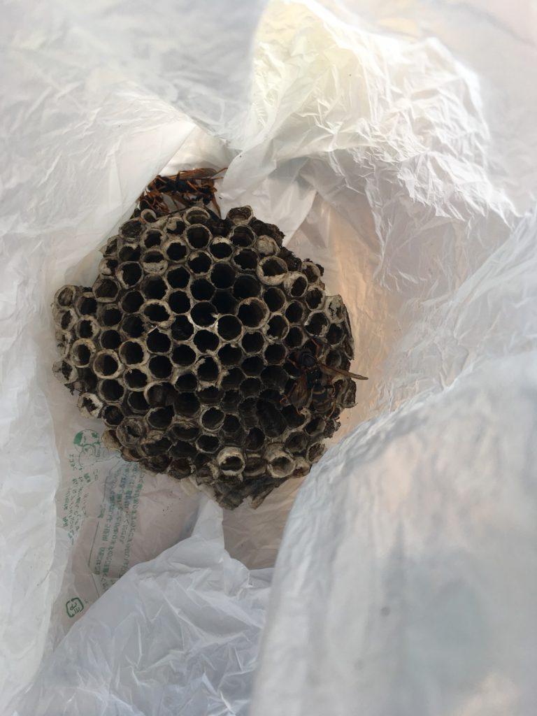 【千葉県柏市】7月22日、アシナガバチの駆除依頼がありました【場所:エアコンの室外機の中】