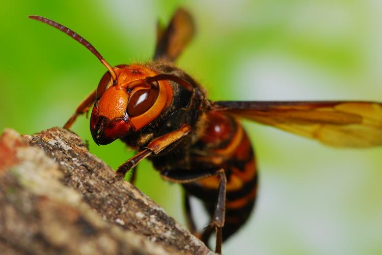 蜂の巣の種類について~本日7月4日蜂の巣駆除依頼が千葉県柏市で2件入っています~