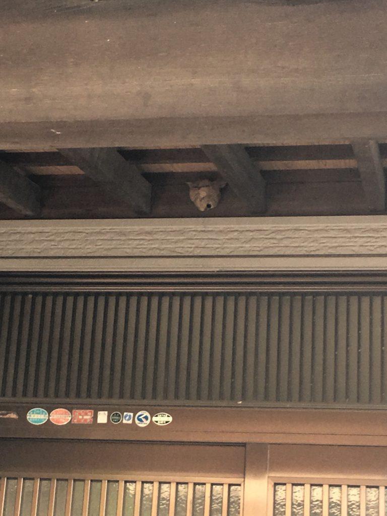 【千葉県船橋市】8月3日、スズメバチの蜂の巣駆除依頼がありました【場所:玄関上】