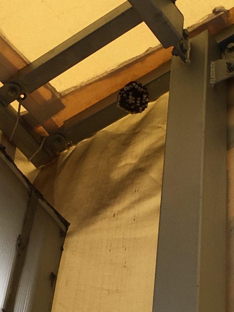 【千葉県柏市高田】8月7日、アシナガバチの蜂の巣駆除依頼がありました【場所:工場敷地内】