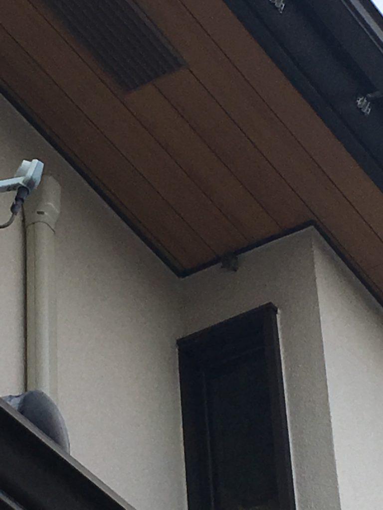 【千葉県柏市松ヶ崎】8月13日、アシナガバチの蜂の巣駆除依頼がありました【場所:2階の軒下】