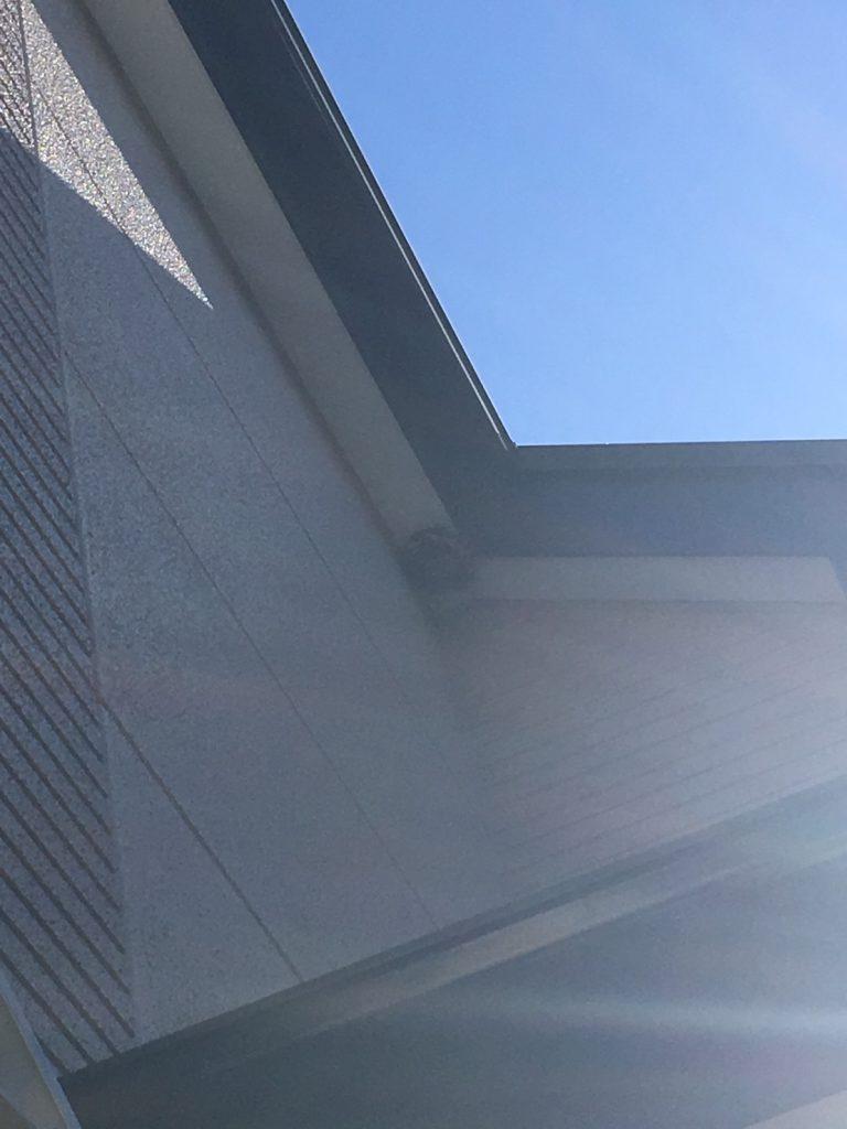 【千葉県柏市南増尾】8月21日、アシナガバチの蜂の巣駆除依頼がありました【場所:2階軒下】