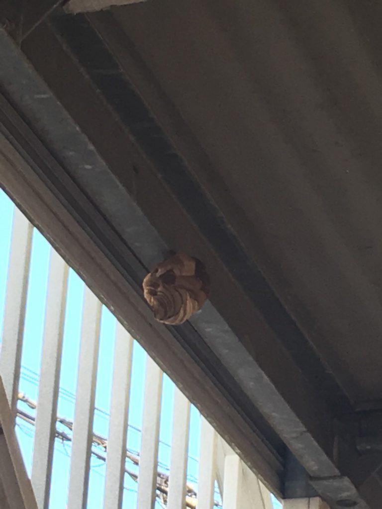 【千葉県柏市南高台】8月21日、スズメバチの蜂の巣駆除依頼がありました【場所:マンション2階共用通路下】