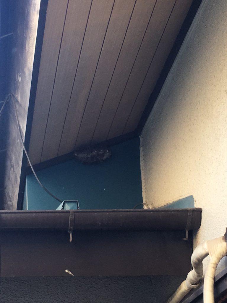 【千葉県柏市つくしが丘】9月3日、アシナガバチの蜂の巣駆除依頼がありました【場所:1階軒下】