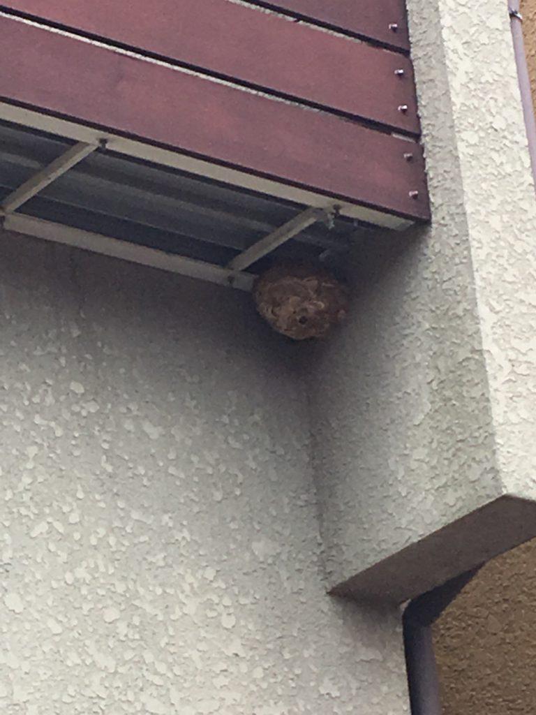 【千葉県柏市高田】9月16日、スズメバチの蜂の巣駆除依頼がありました【場所:ベランダ下】