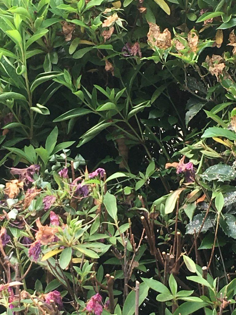 千葉県我孫子市の蜂の巣駆除現場