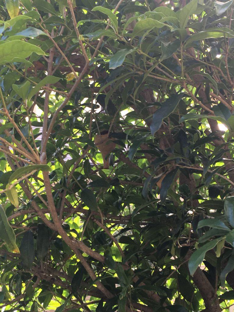 千葉県我孫子市の蜂の巣駆除の現場