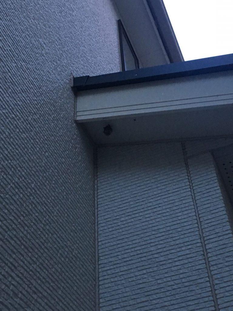 千葉県柏市の蜂の巣駆除現場