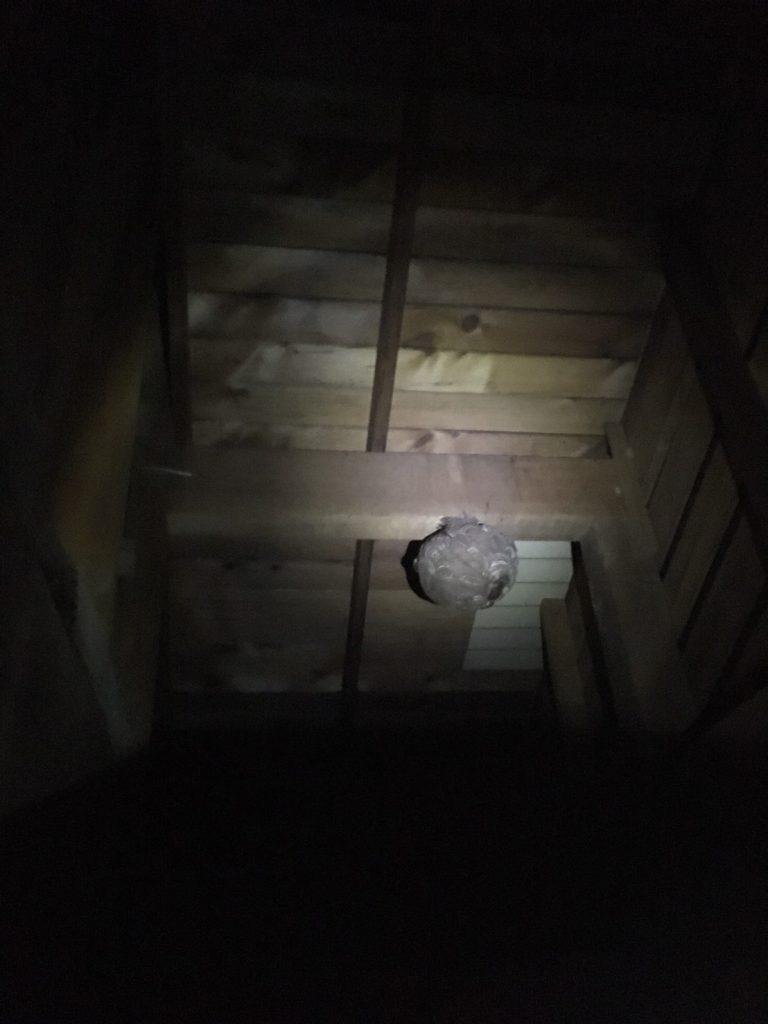 千葉県柏市名戸ヶ谷の蜂の巣駆除現場