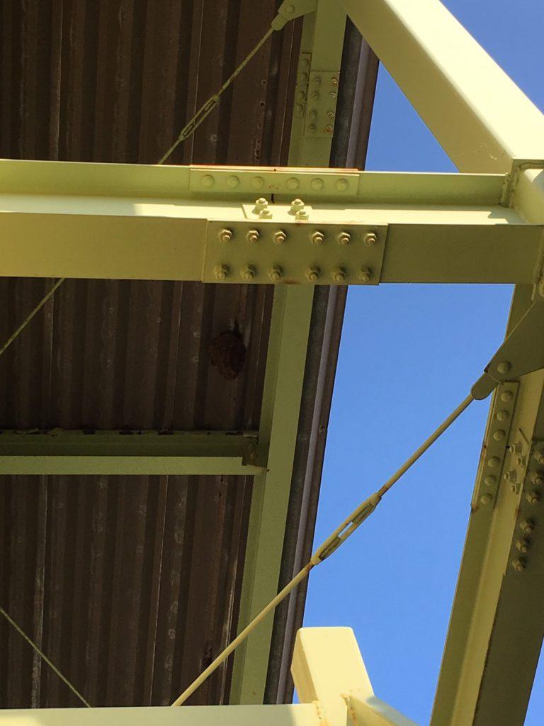 千葉県柏市明原の蜂の巣駆除現場