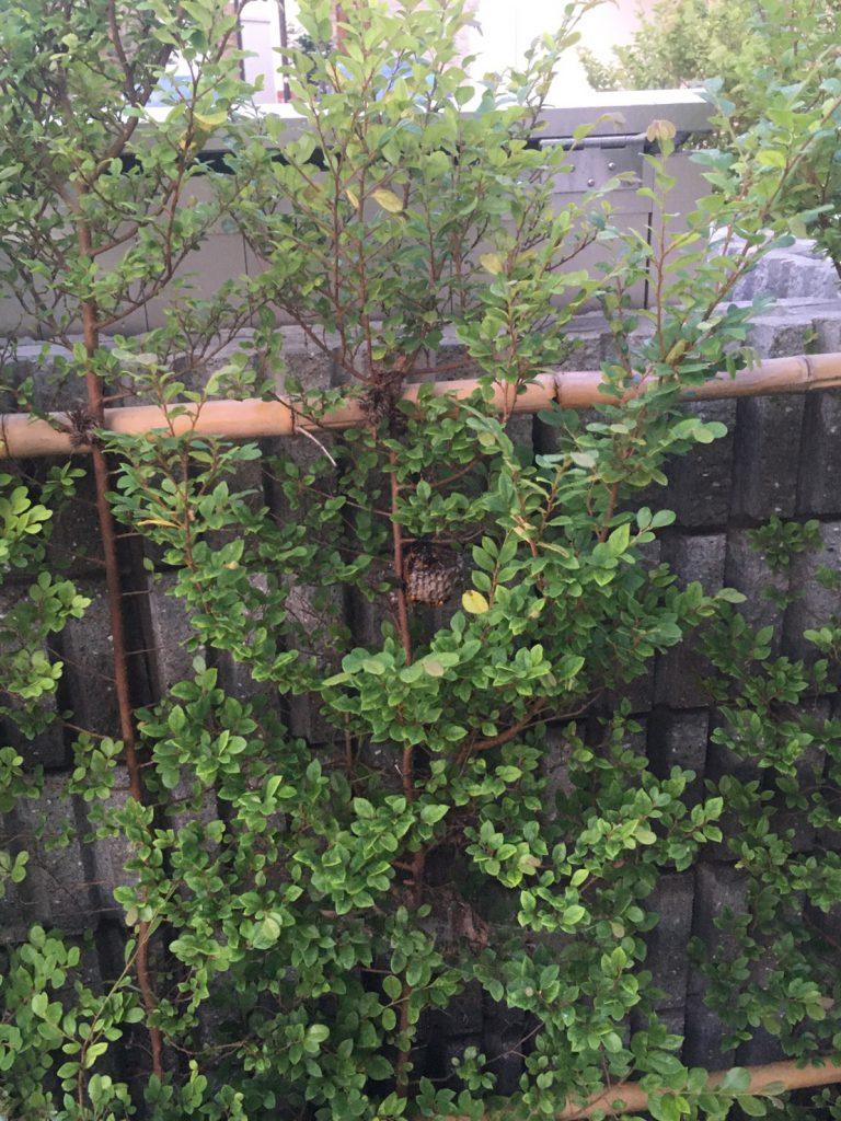 千葉県柏市大室の蜂の巣駆除現場