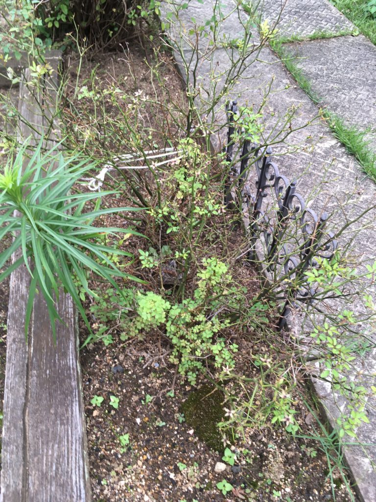 千葉県柏市布施新町の蜂の巣駆除現場