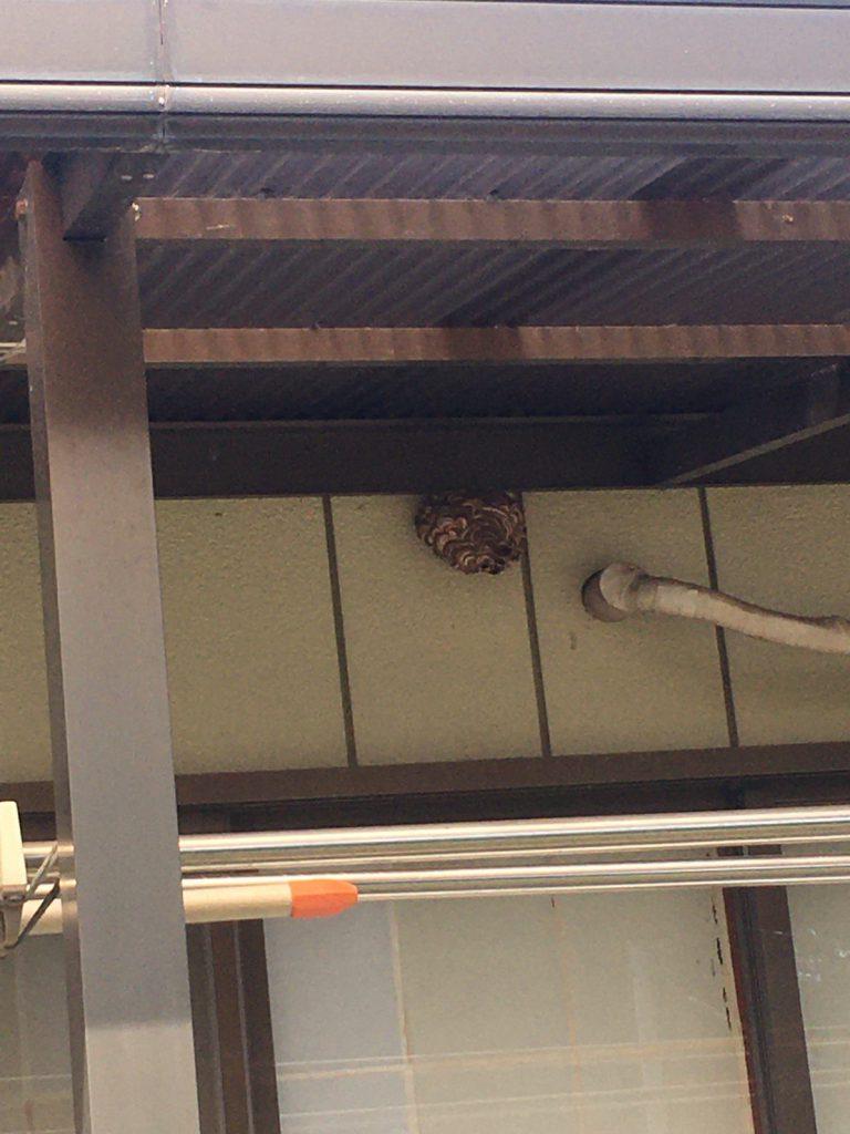 千葉県我孫子市中峠の蜂の巣駆除現場