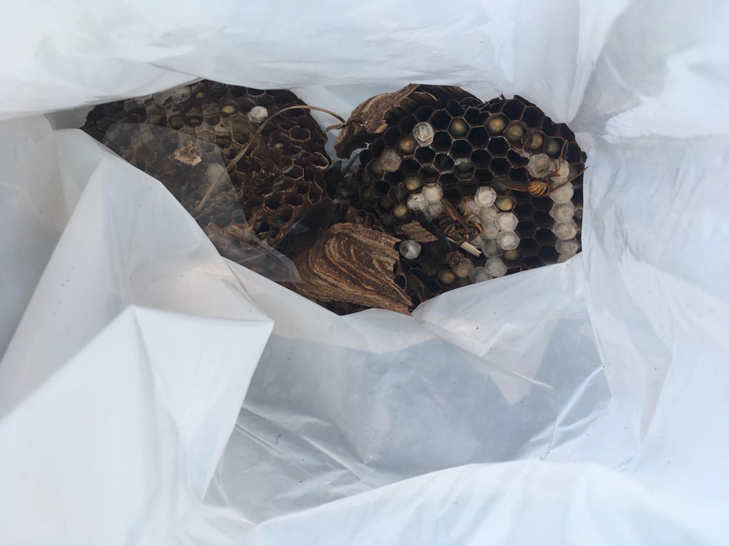 【千葉県柏市増尾】7月31日、スズメバチの蜂の巣駆除依頼がありました【場所:屋根のすき間】