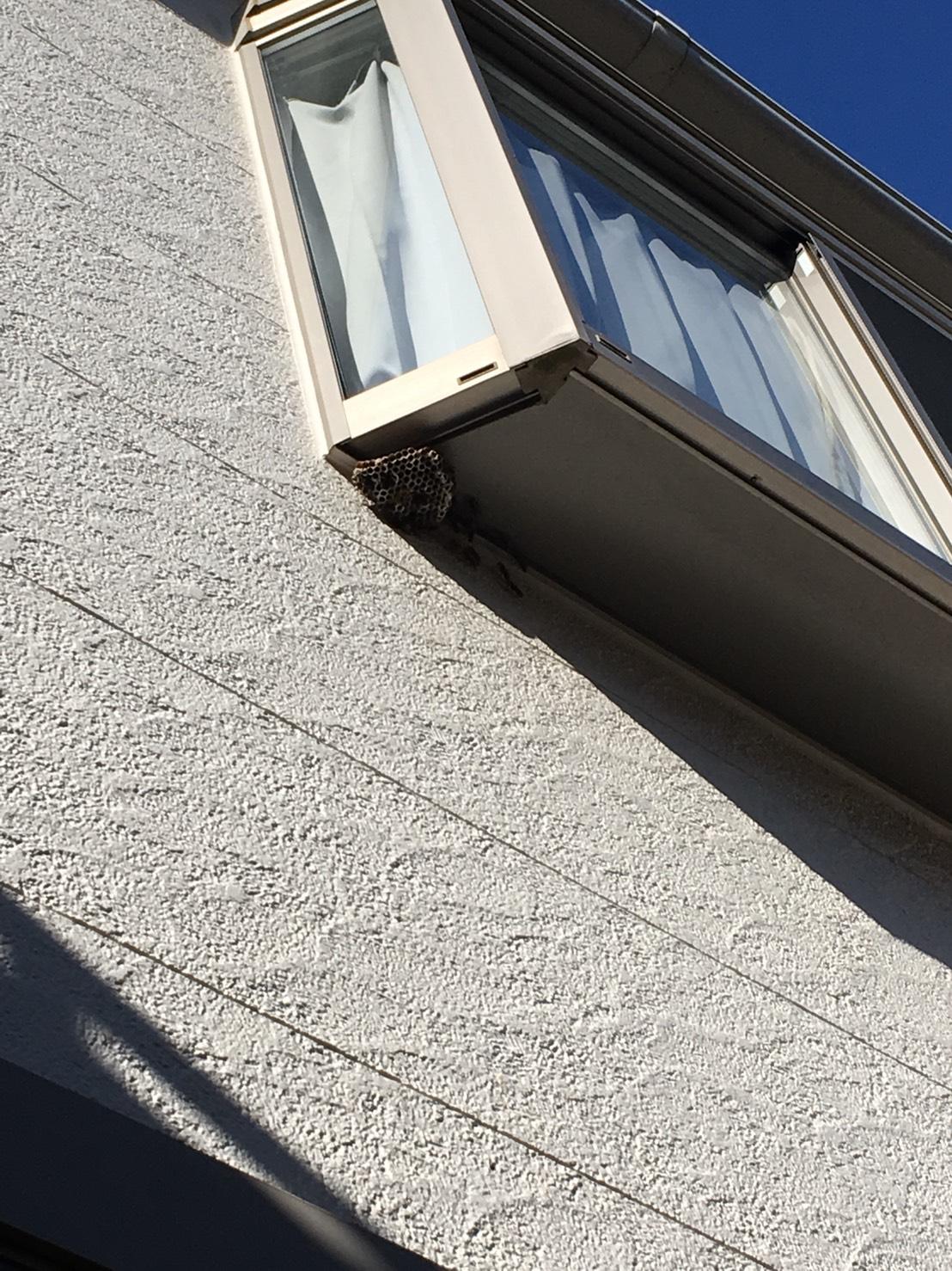【千葉県柏市東中新宿】8月17日、アシナガバチの蜂の巣駆除依頼がありました【場所:出窓】