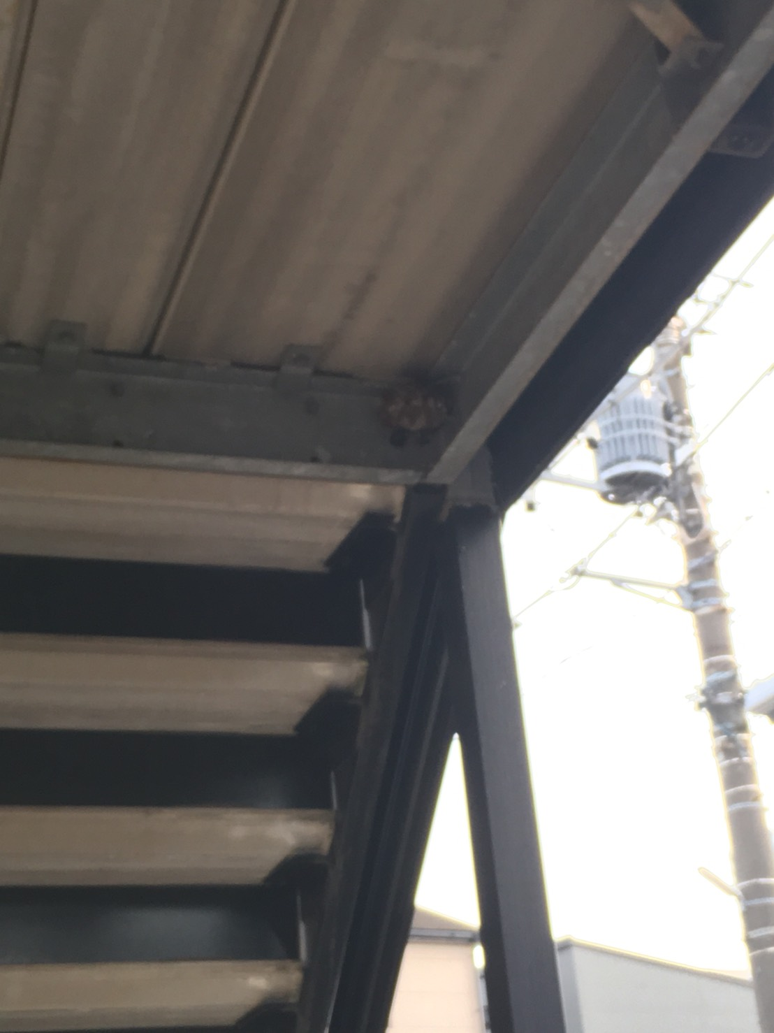 【千葉県柏市柏】8月24日、アシナガバチの蜂の巣駆除依頼がありました【場所:外階段2階下】