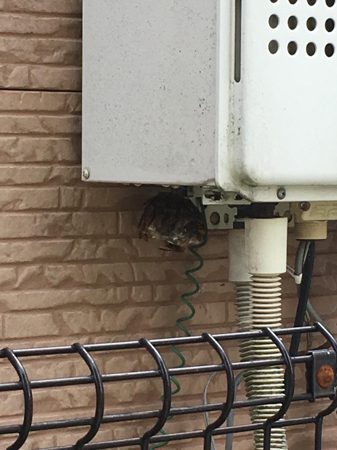 【千葉県野田市】9月4日、アシナガバチの蜂の巣駆除依頼がありました【場所:給湯器の下】