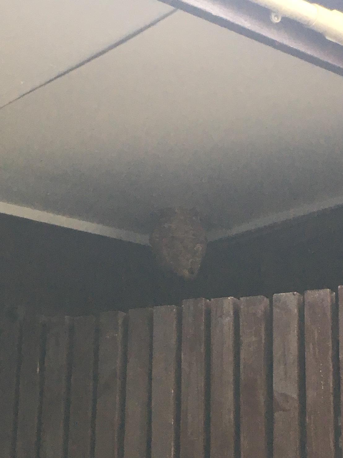 【千葉県柏市今谷上町】9月6日、スズメバチの蜂の巣駆除依頼がありました【場所:玄関横】