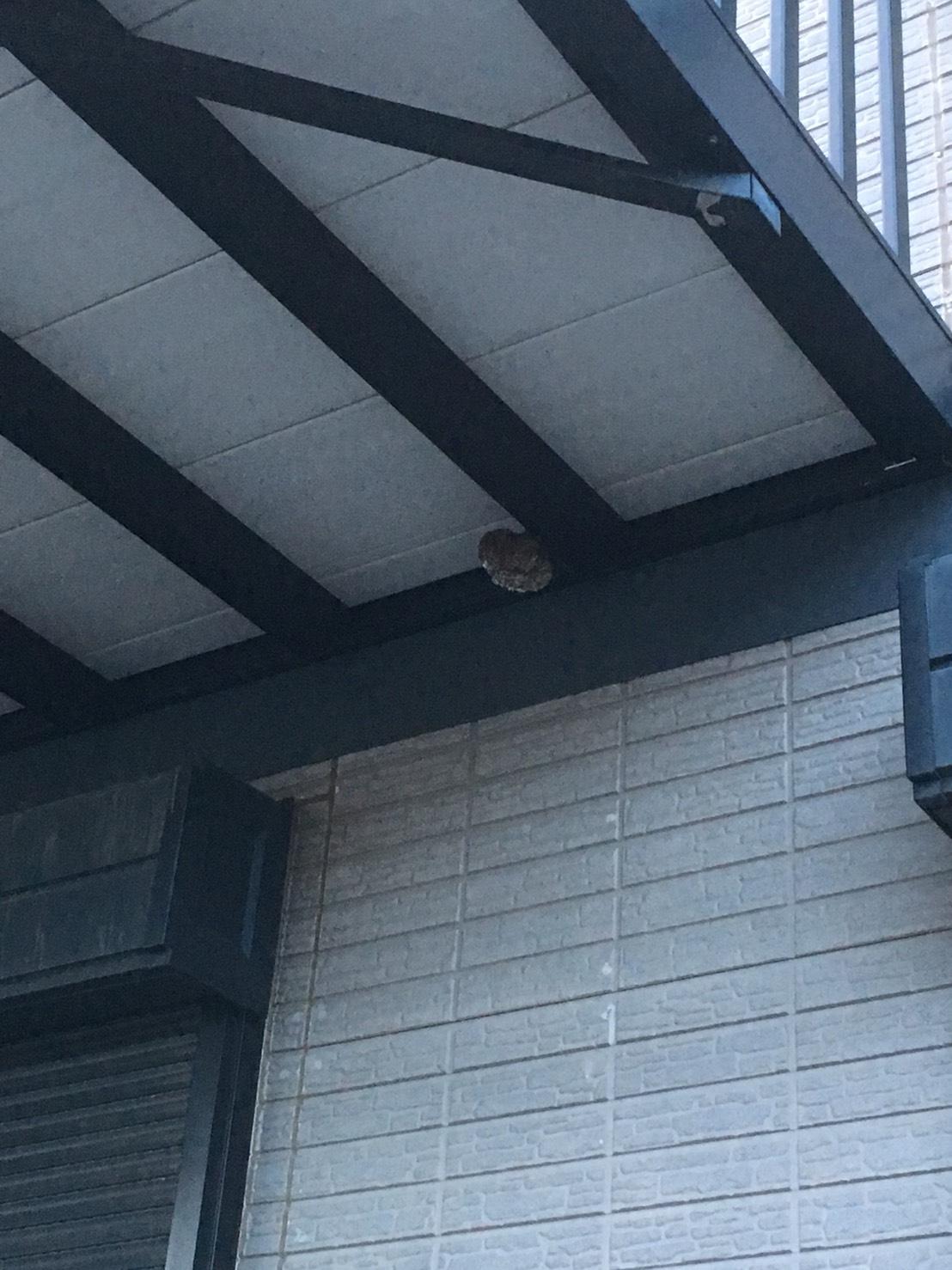 【千葉県柏市つくしが丘】9月7日、アシナガバチの蜂の巣駆除依頼がありました【場所:車庫の上】