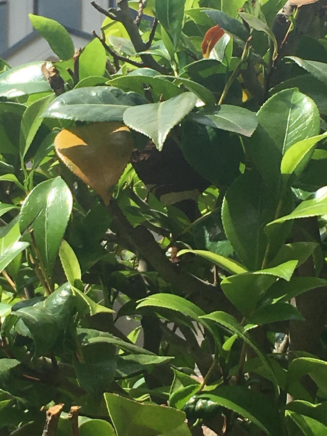 千葉県柏市新柏の蜂の巣駆除現場