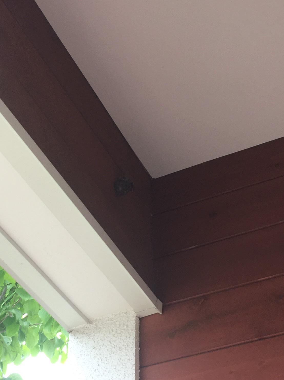 千葉県守谷市の蜂の巣駆除現場