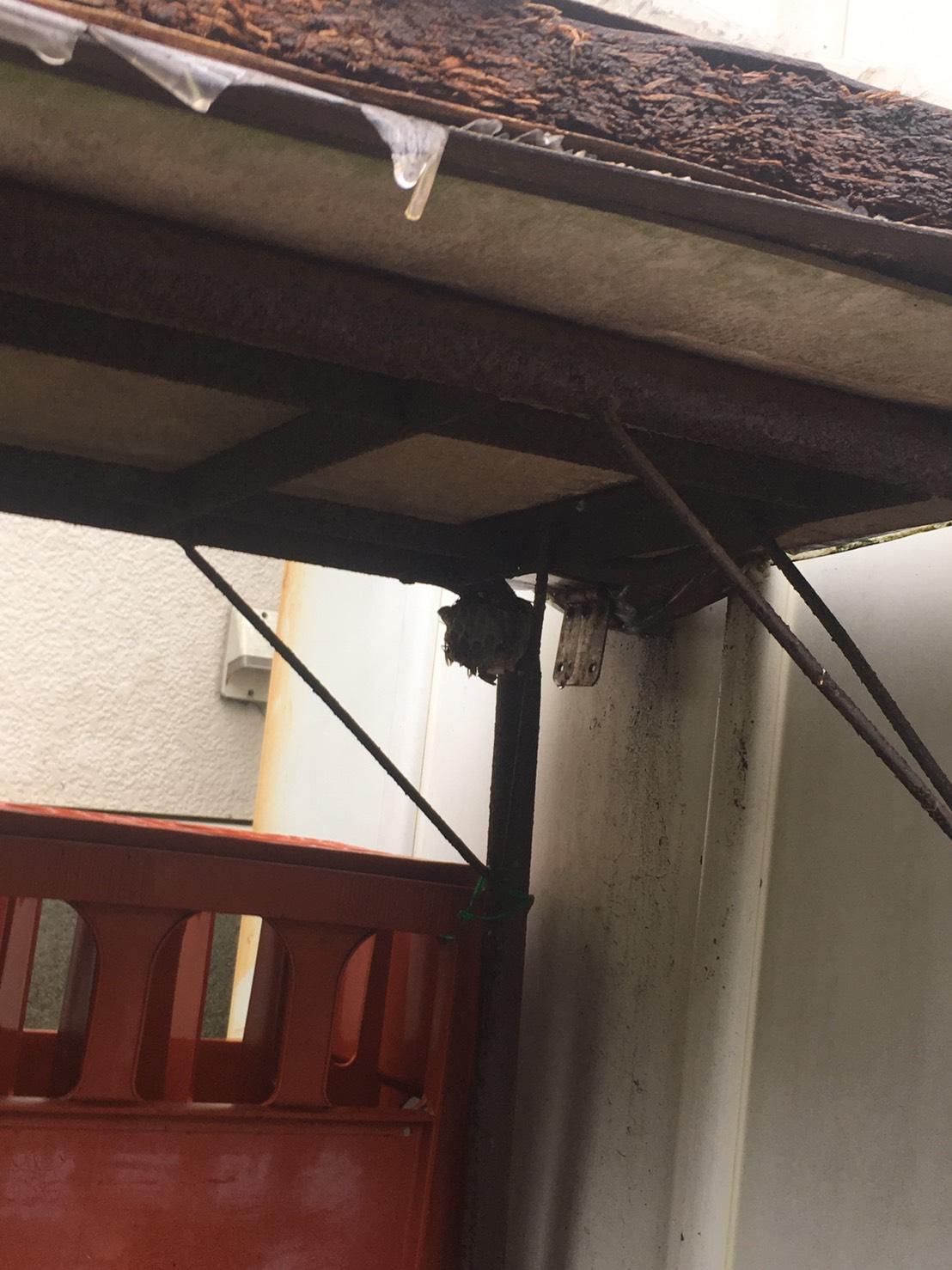 千葉県流山市の蜂の巣駆除現場