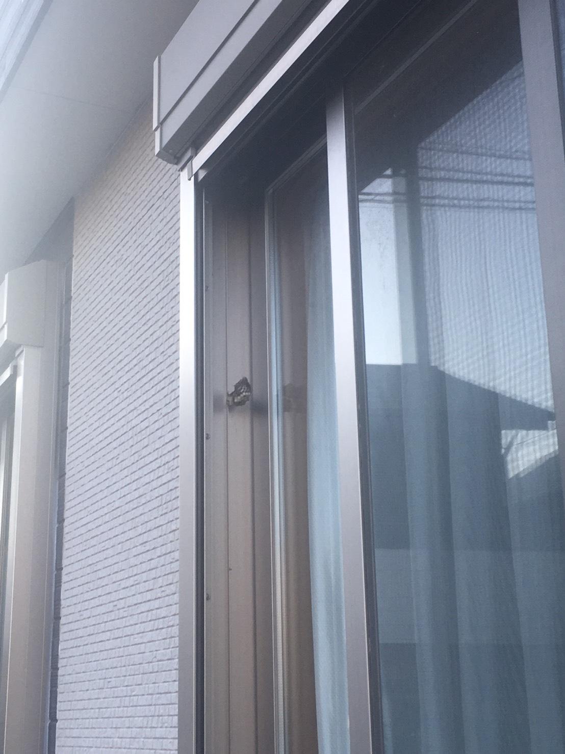 千葉県流山市向小金の蜂の巣駆除現場