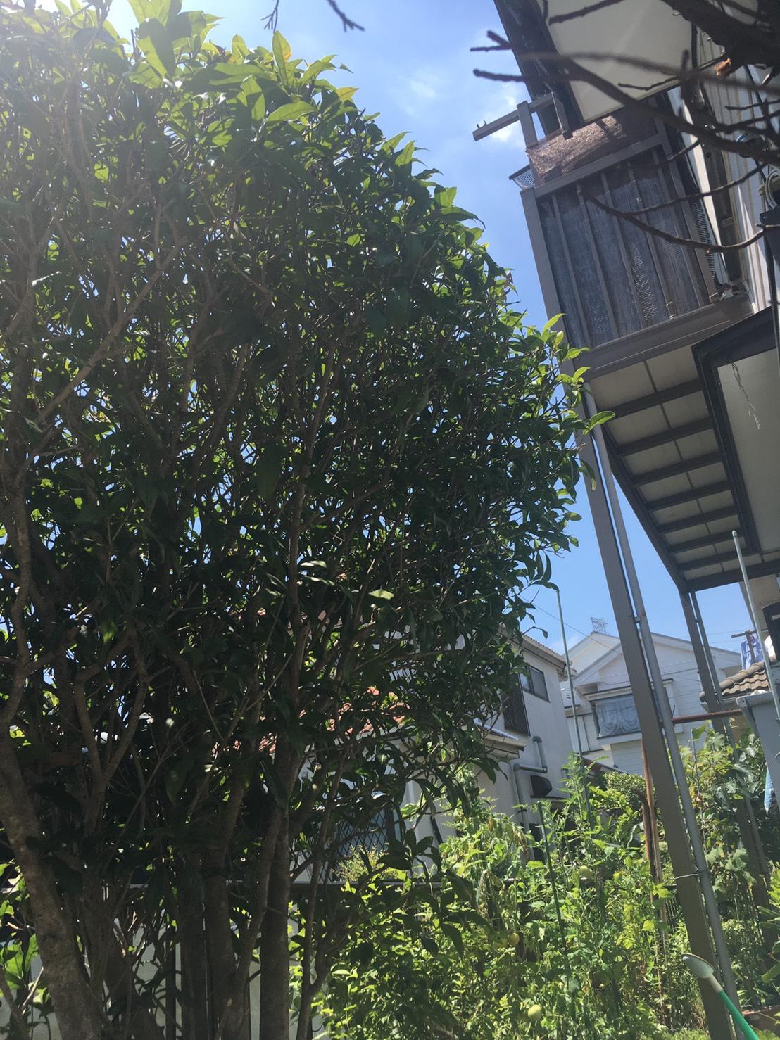 千葉県柏市戸張の蜂の巣駆除現場