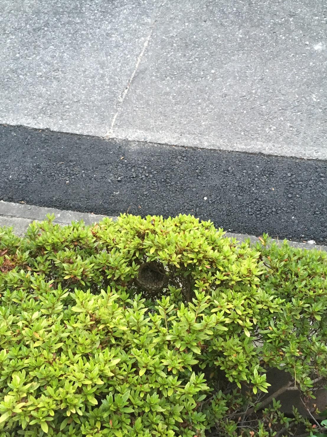 千葉県柏市増尾台の蜂の巣駆除現場