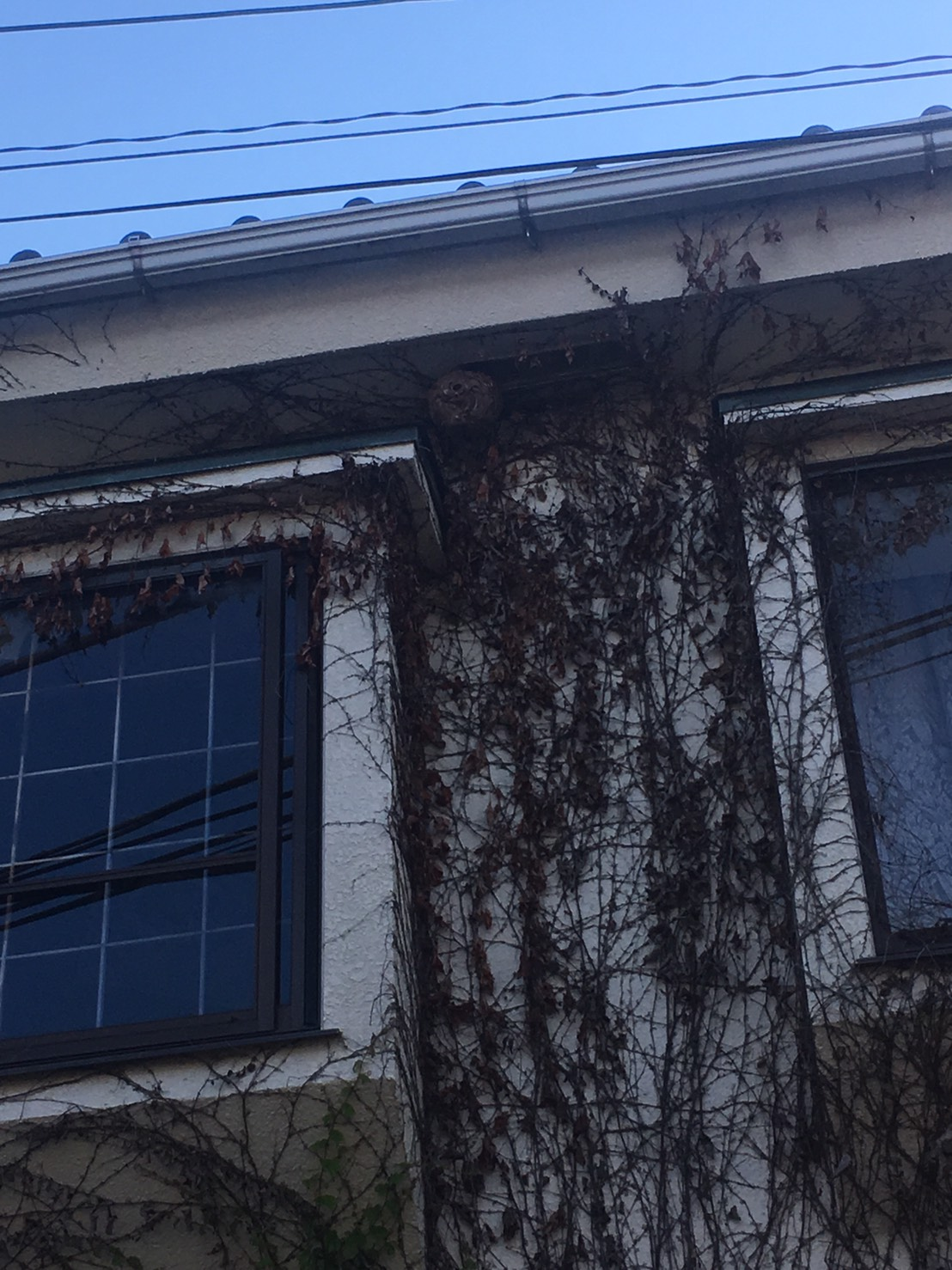 千葉県柏市東中新宿の蜂の巣駆除現場