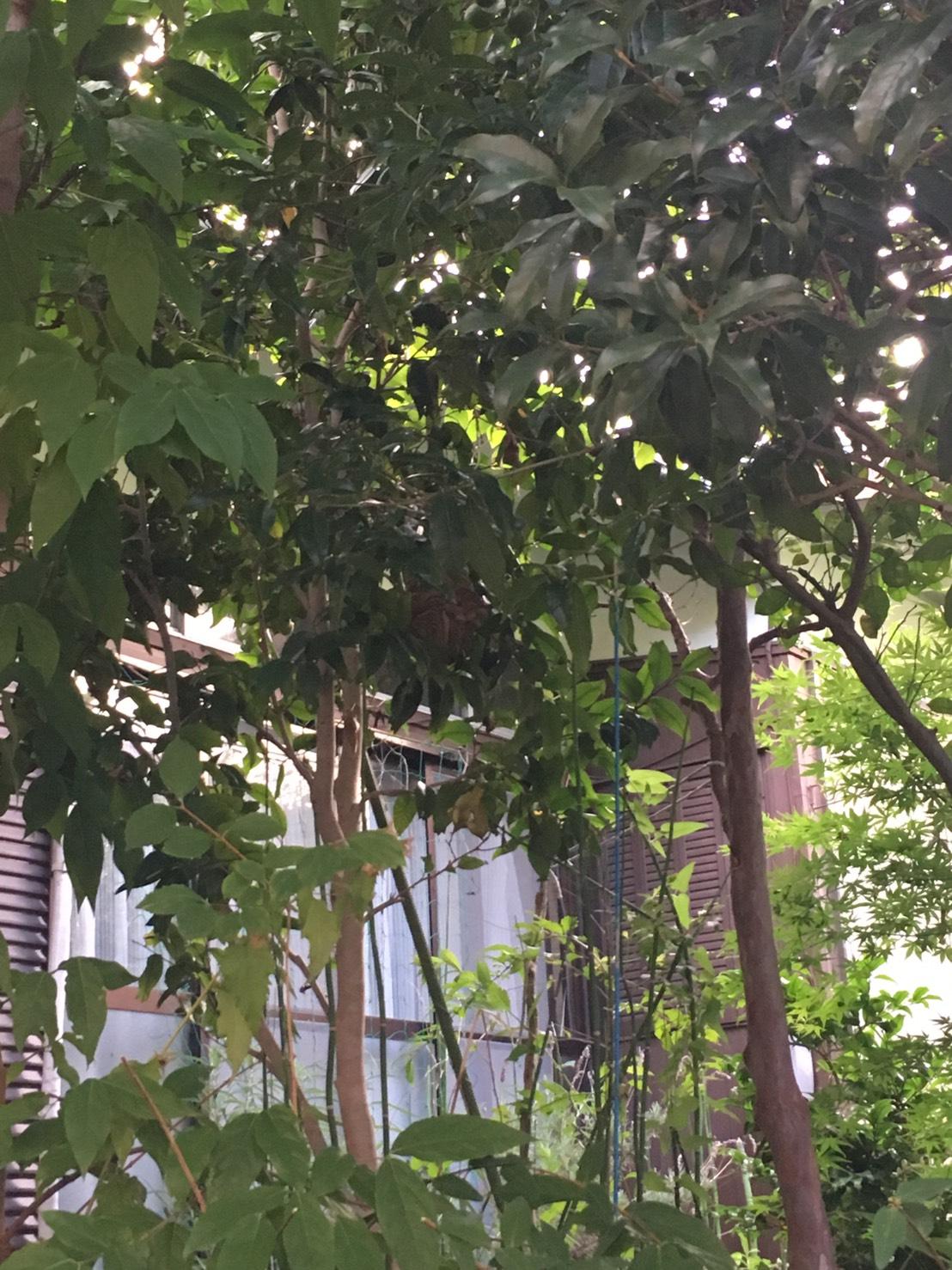 千葉県柏市加賀の蜂の巣駆除現場