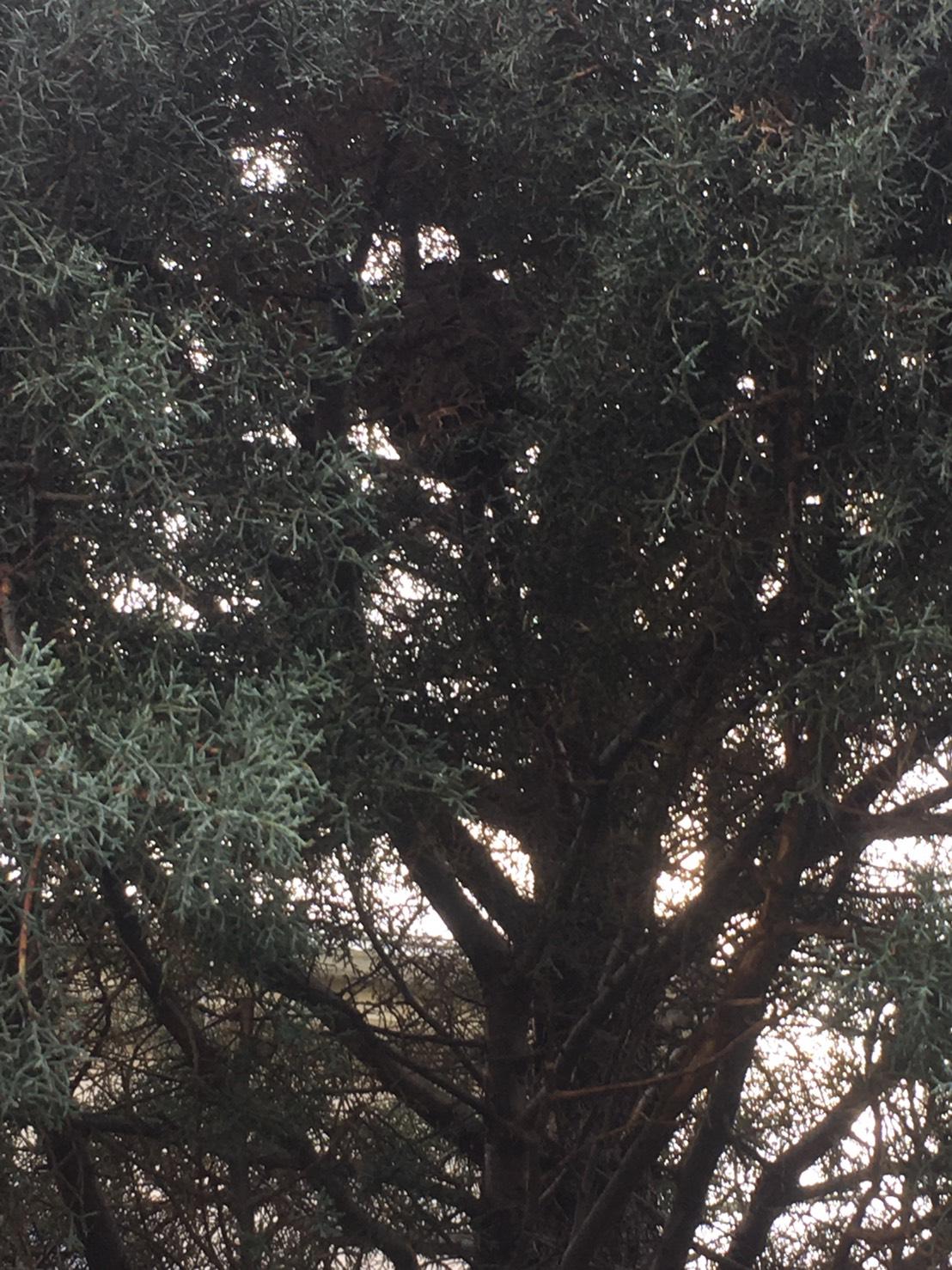 千葉県柏市根戸の蜂の巣駆除現場