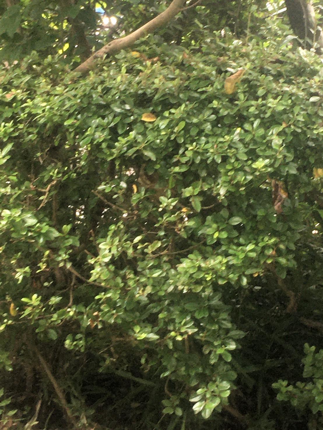 千葉県我孫子市天王台の蜂の巣駆除現場