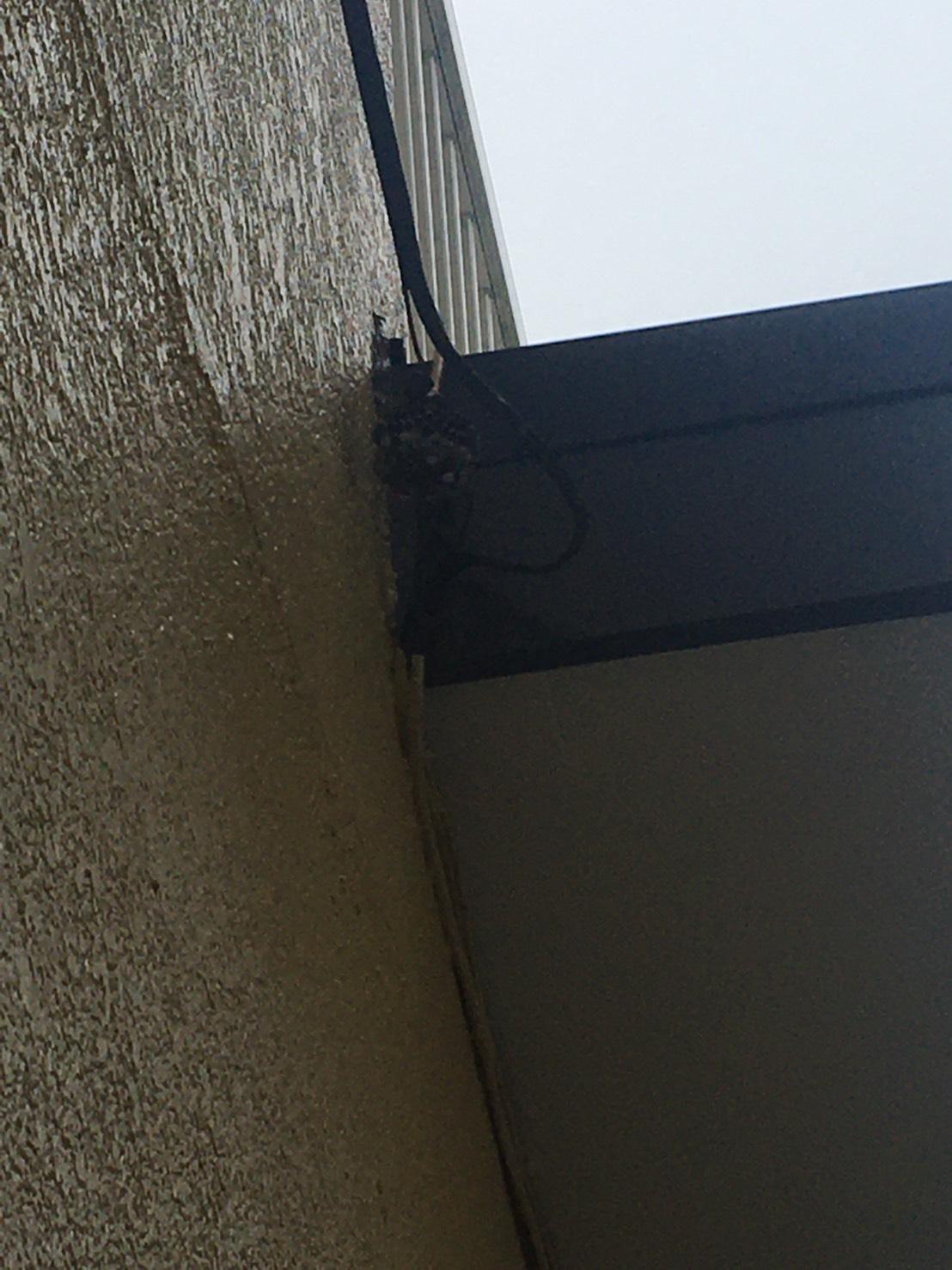 千葉県我孫子市根戸の蜂の巣駆除現場