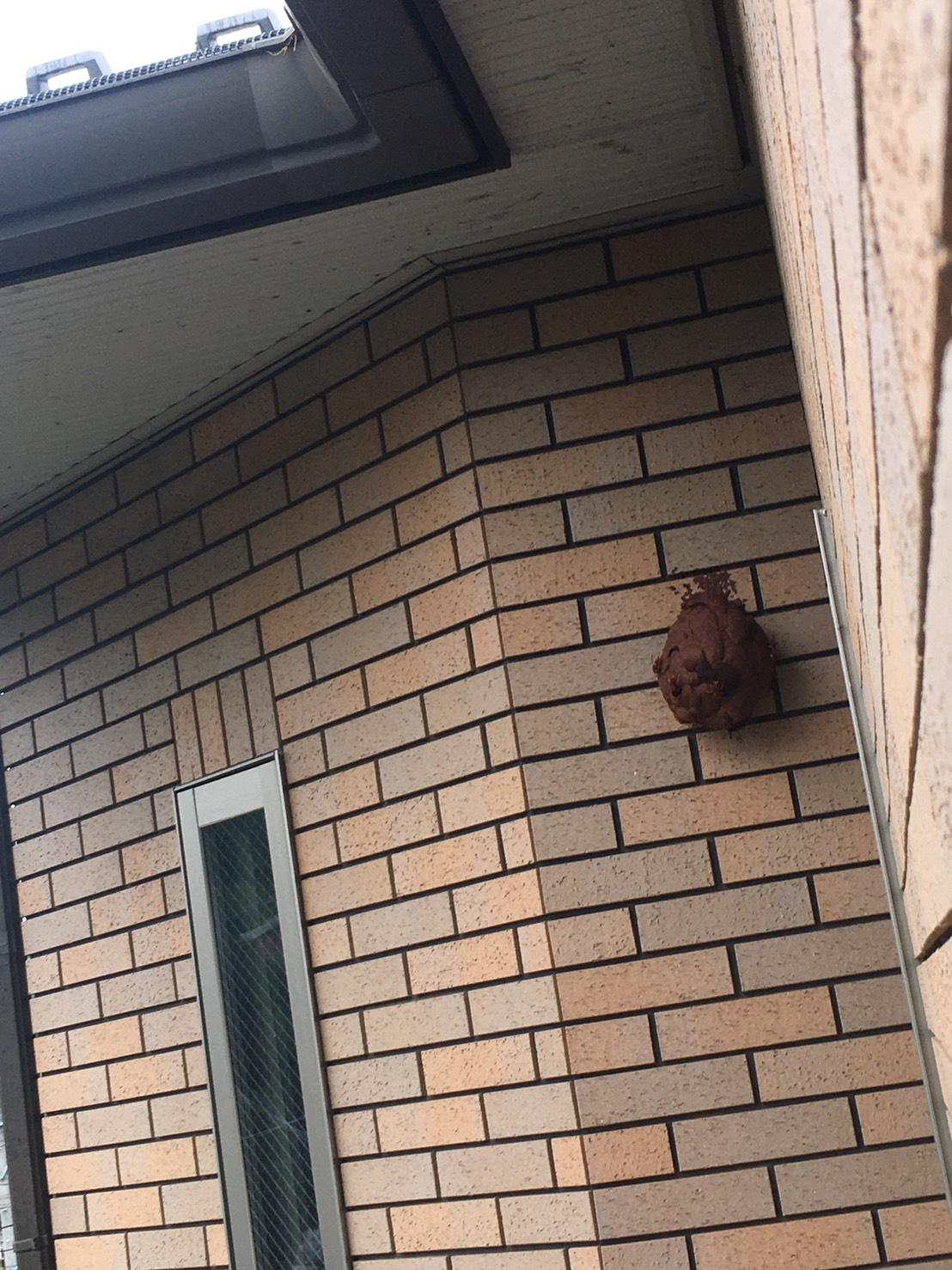 千葉県柏市花野井の蜂の巣駆除現場