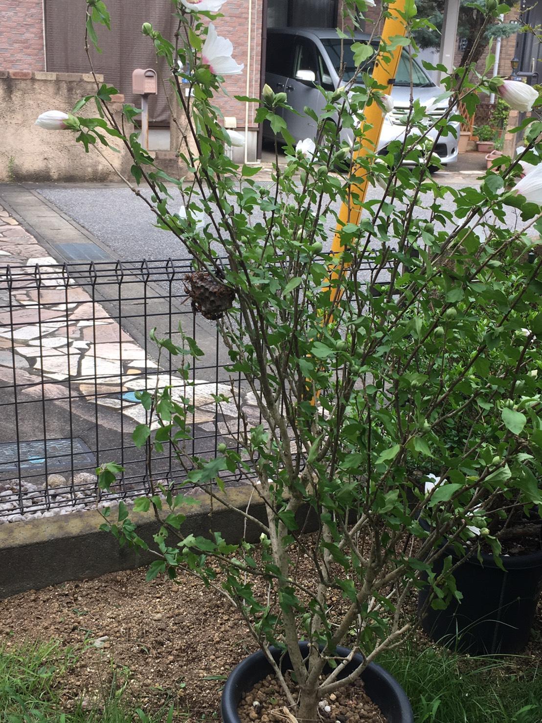 千葉県柏市中原の蜂の巣駆除現場