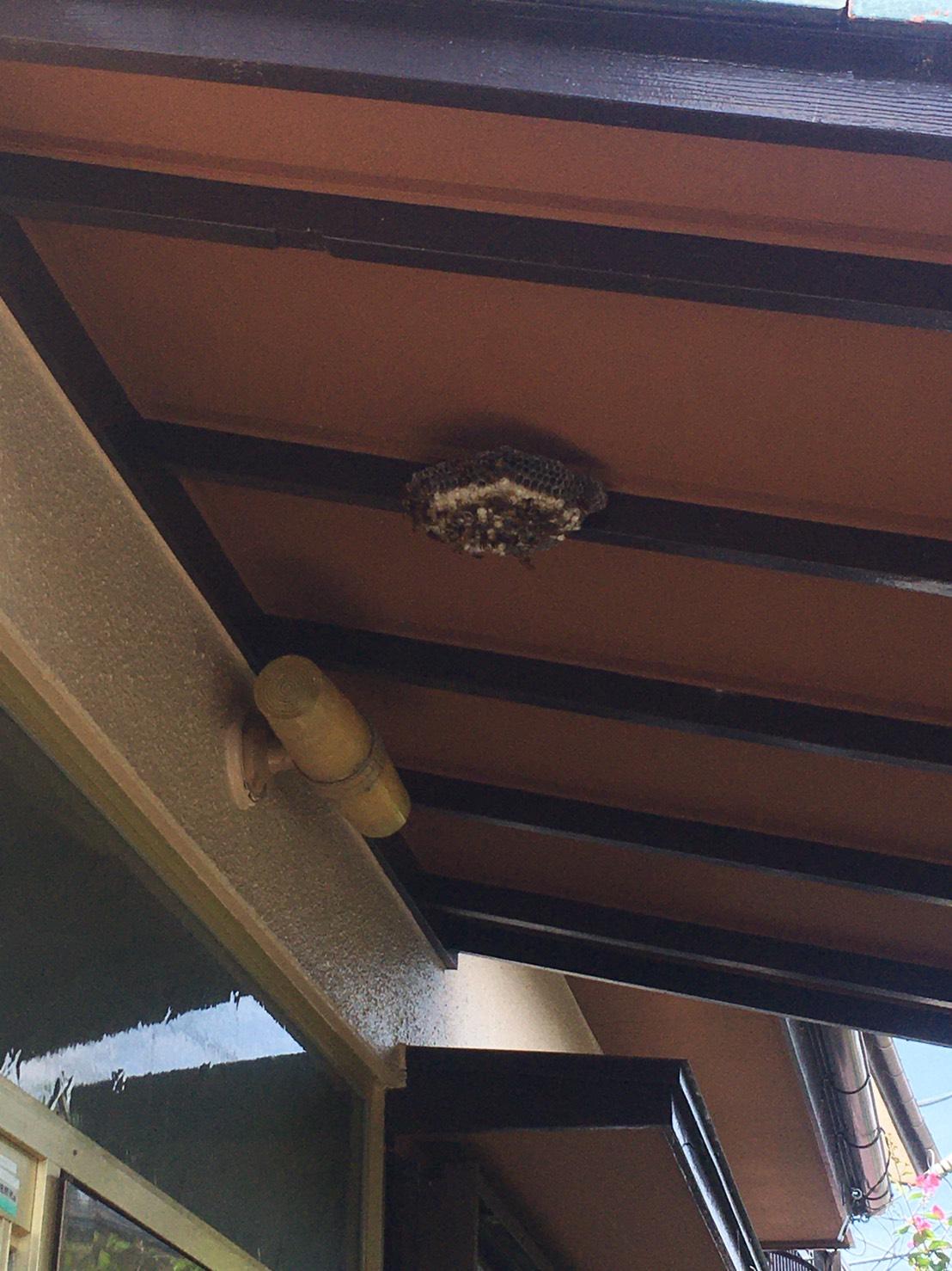 千葉県我孫子市下ヶ戸の蜂の巣駆除現場