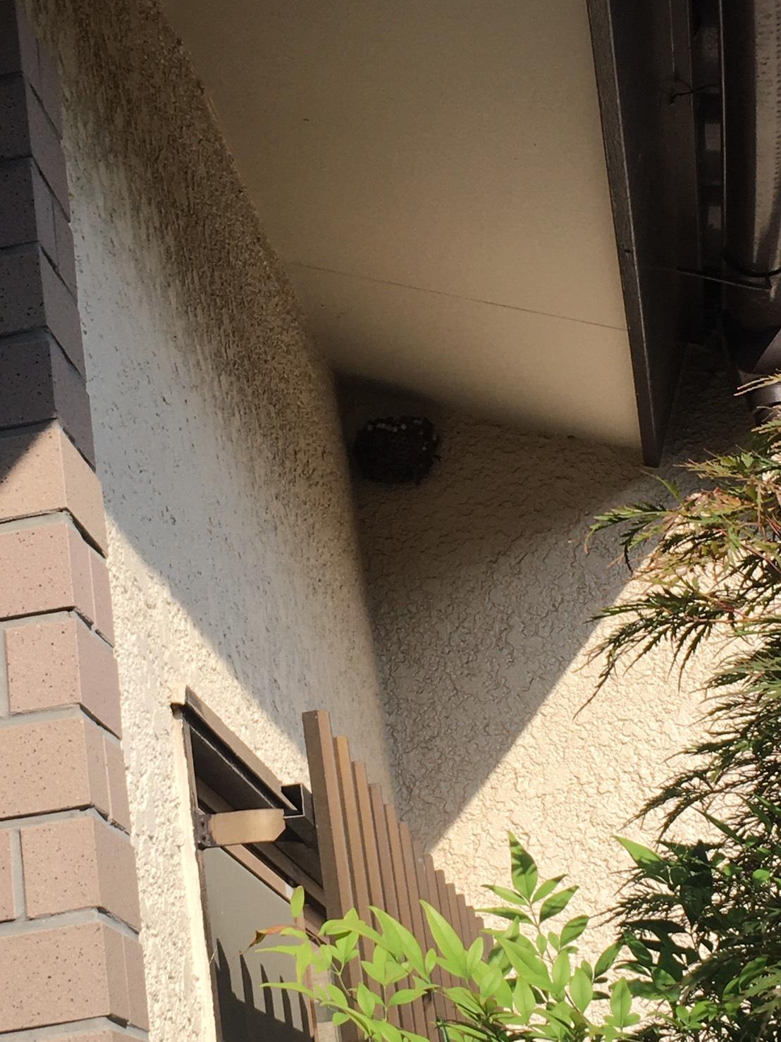 千葉県柏市南増尾の蜂の巣駆除現場