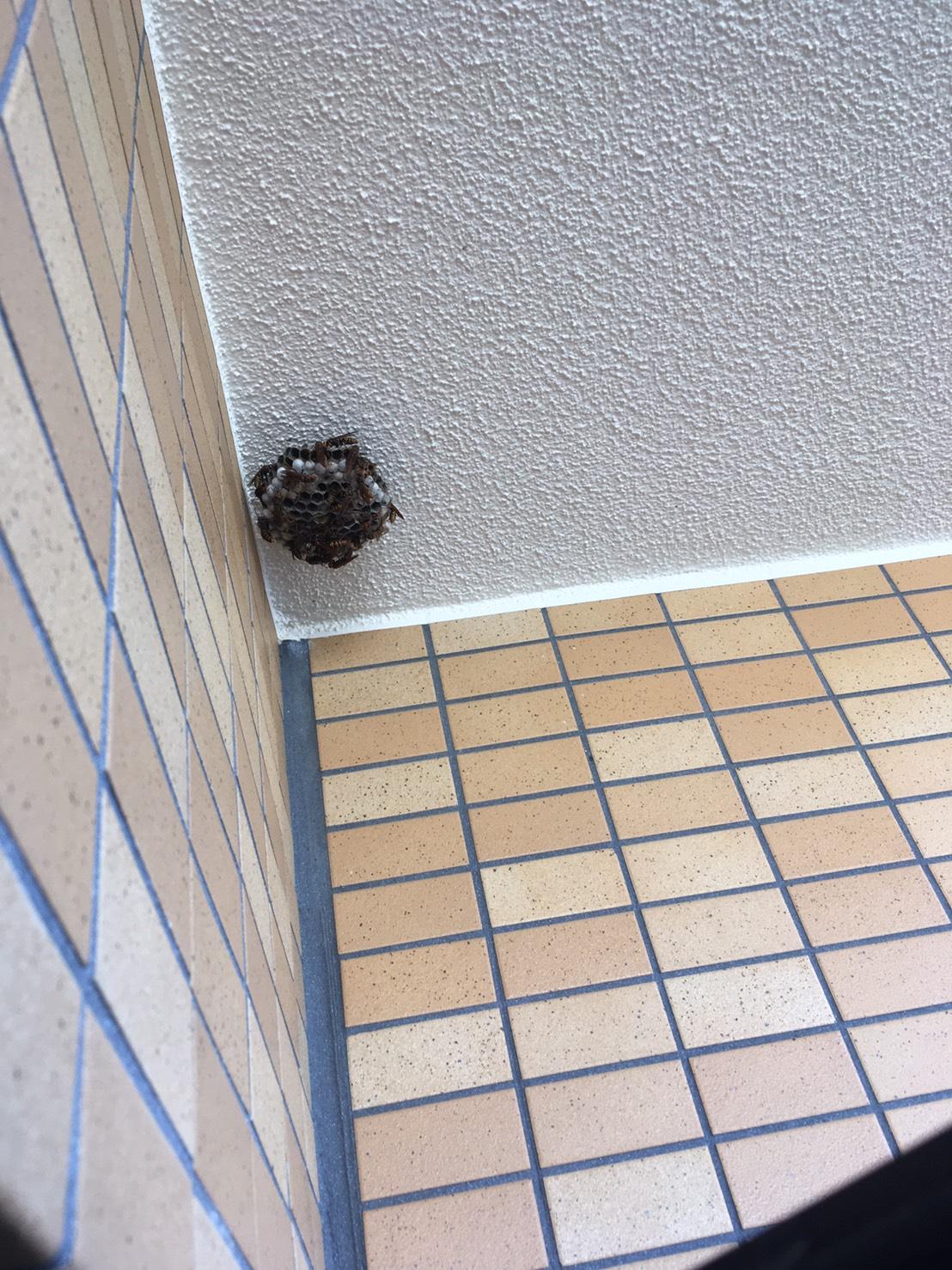 千葉県柏市あかね町の蜂の巣駆除現場