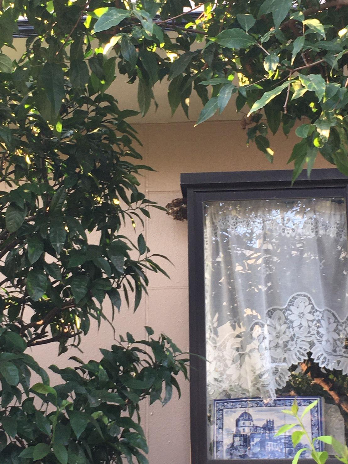 千葉県我孫子市つくし野の蜂の巣駆除現場