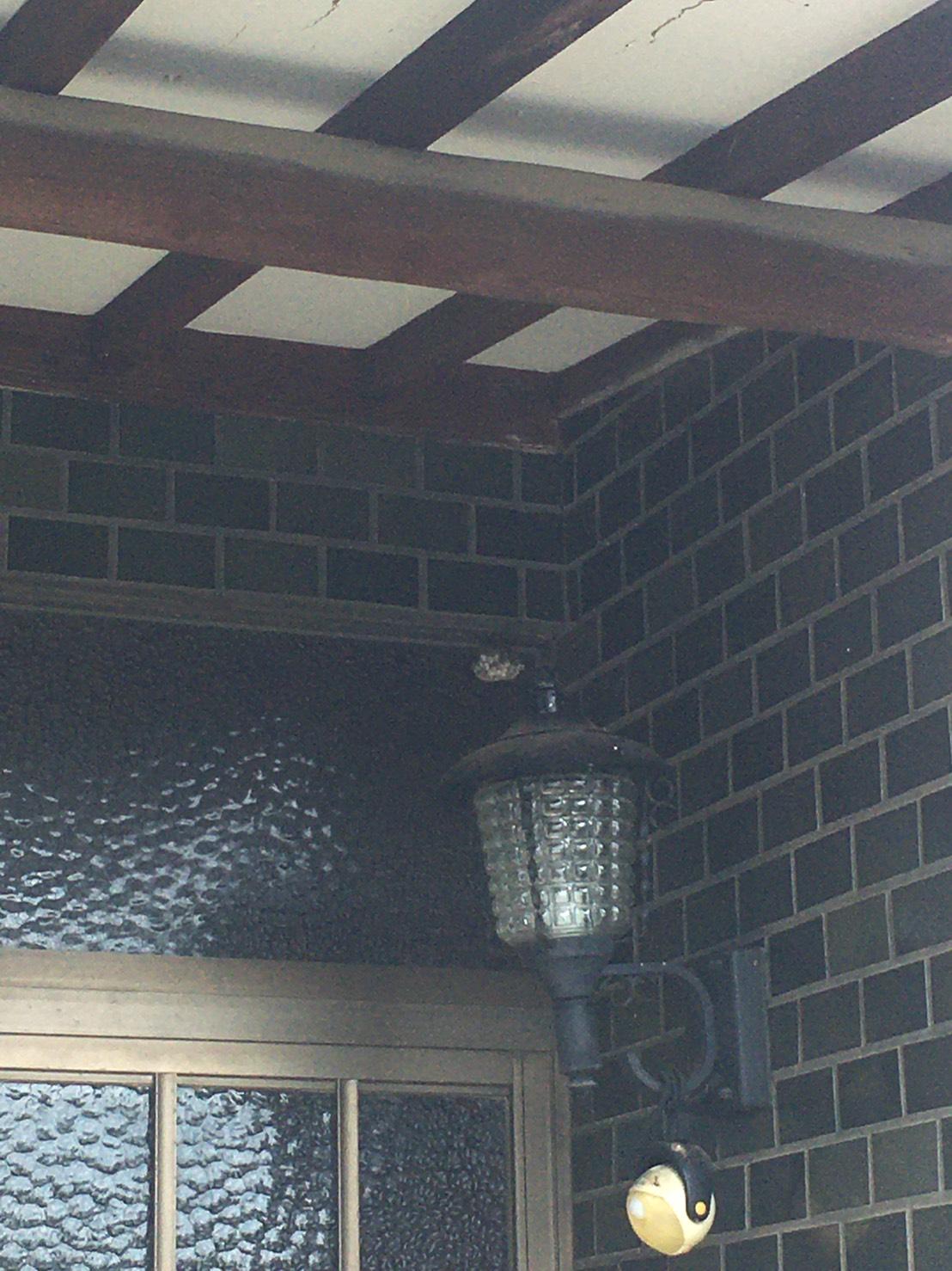 千葉県柏市西町の蜂の巣駆除現場