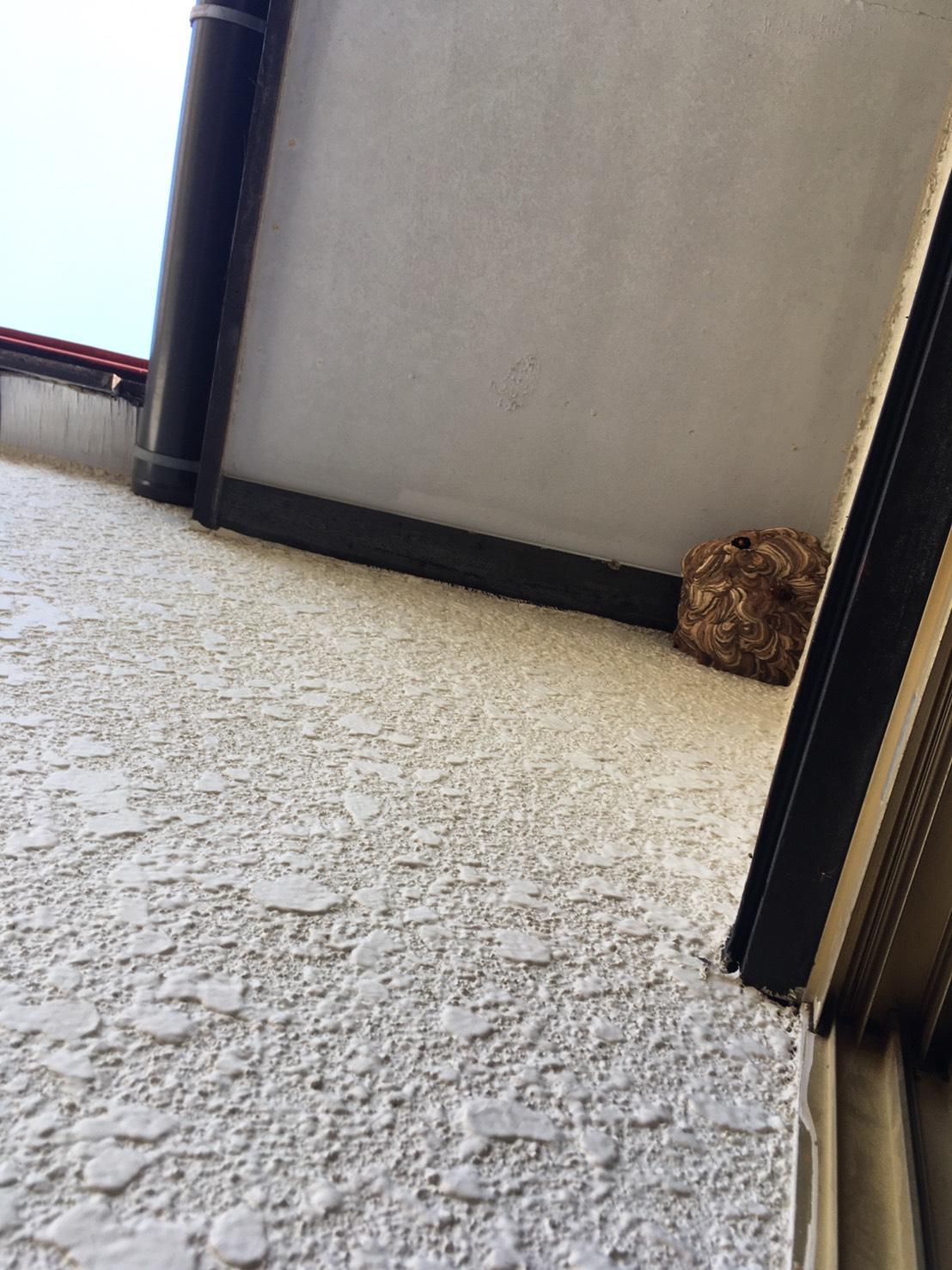 千葉県我孫子市久寺家の蜂の巣駆除現場